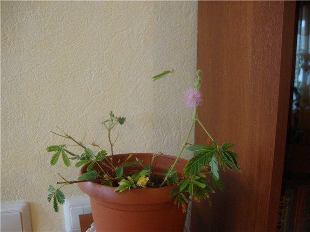 что я вырастила из семян - Страница 4 Dfe6d89b0eac