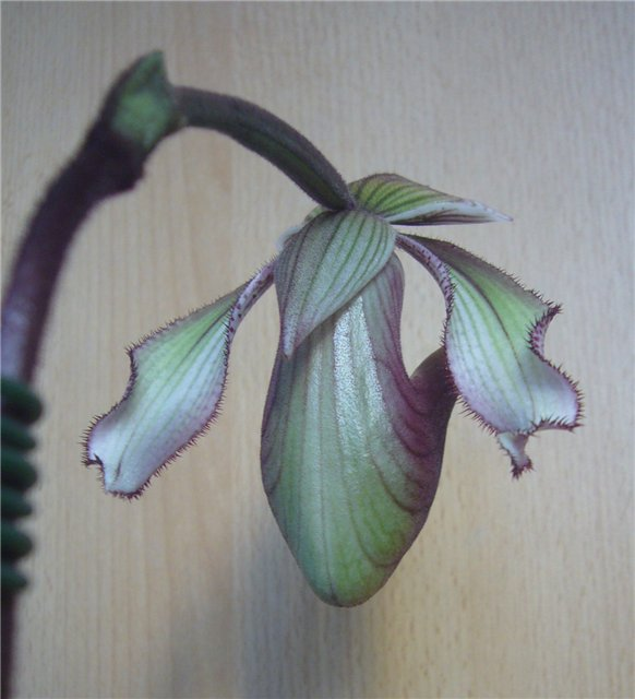 Обсуждение Орчидинна (Orchid Inn., USA) 2e1e726dd4b9