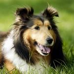 Аватары с животными - Страница 2 063775cf4947