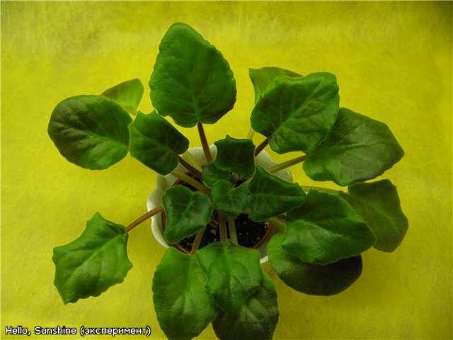 Цветение к Н. Г. (Olga-flora) - Страница 5 7ee8d1fb81b3