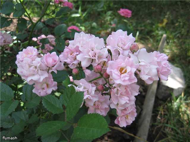 Во саду ли, в огороде... - Страница 2 9a1af11b8ea4