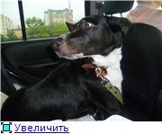 Чара - потрясающая собака! Ищет лучших хозяев! 0511ff46ee4at
