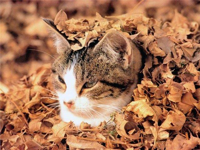 Фотографии кошек 0d5c864f31ab