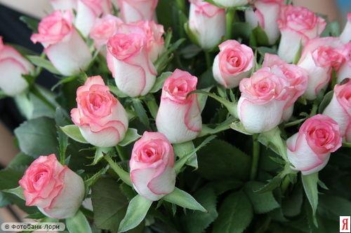15 марта Марию поздравляем с Днем рождения 0e4dfd1d234f