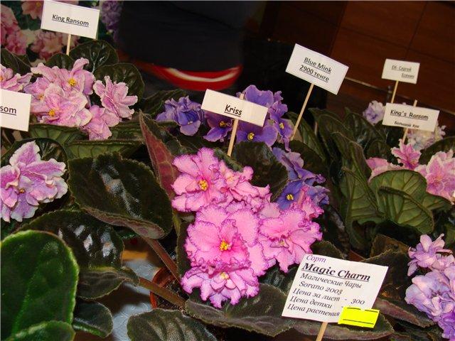 Международая выставка «Цветы.Ландшафт .Усадьба 2010» Астана - Страница 4 0a19686af156