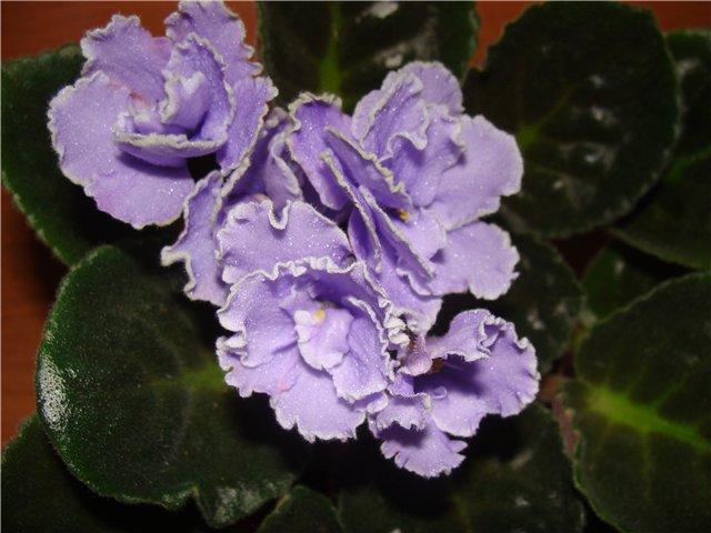 Весеннее  цветение (Хваст от Веры) - Страница 2 58da7133db5f