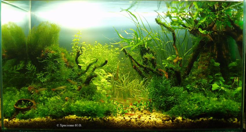 "Как родился аквариум ""Луч света"" Fad691a638e1"