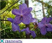 Орхидеи и прочая красота на о. Пхукет - Страница 2 Ab18eae27317t