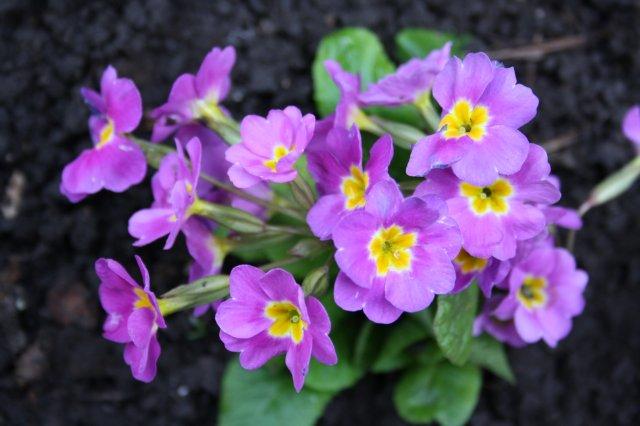 Растения от FILIGERa - Страница 2 648a4627ce68