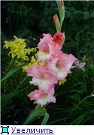 Лето в наших садах - Страница 7 B8f79d41c485t
