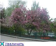 Помогите опознать растение. F22834f528cdt
