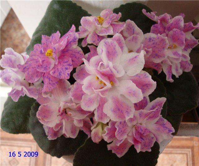 мои любимые цветочки - Страница 2 66bc93957e33