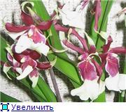 наши домашние цветники - Страница 2 68cc7f401e3ft