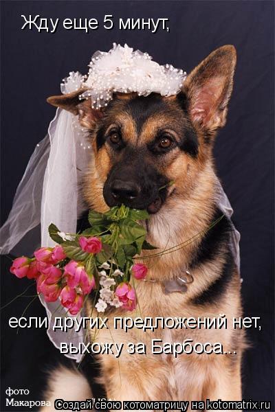 Смешное фото собак 9630628e0ff4
