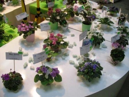 Выставка РООЛС  на ВВЦ (апрель 2010) 8a451fd64d48