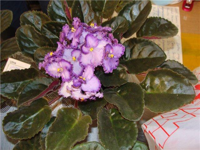 Международая выставка «Цветы.Ландшафт .Усадьба 2010» Астана - Страница 2 E9b1443b1c73