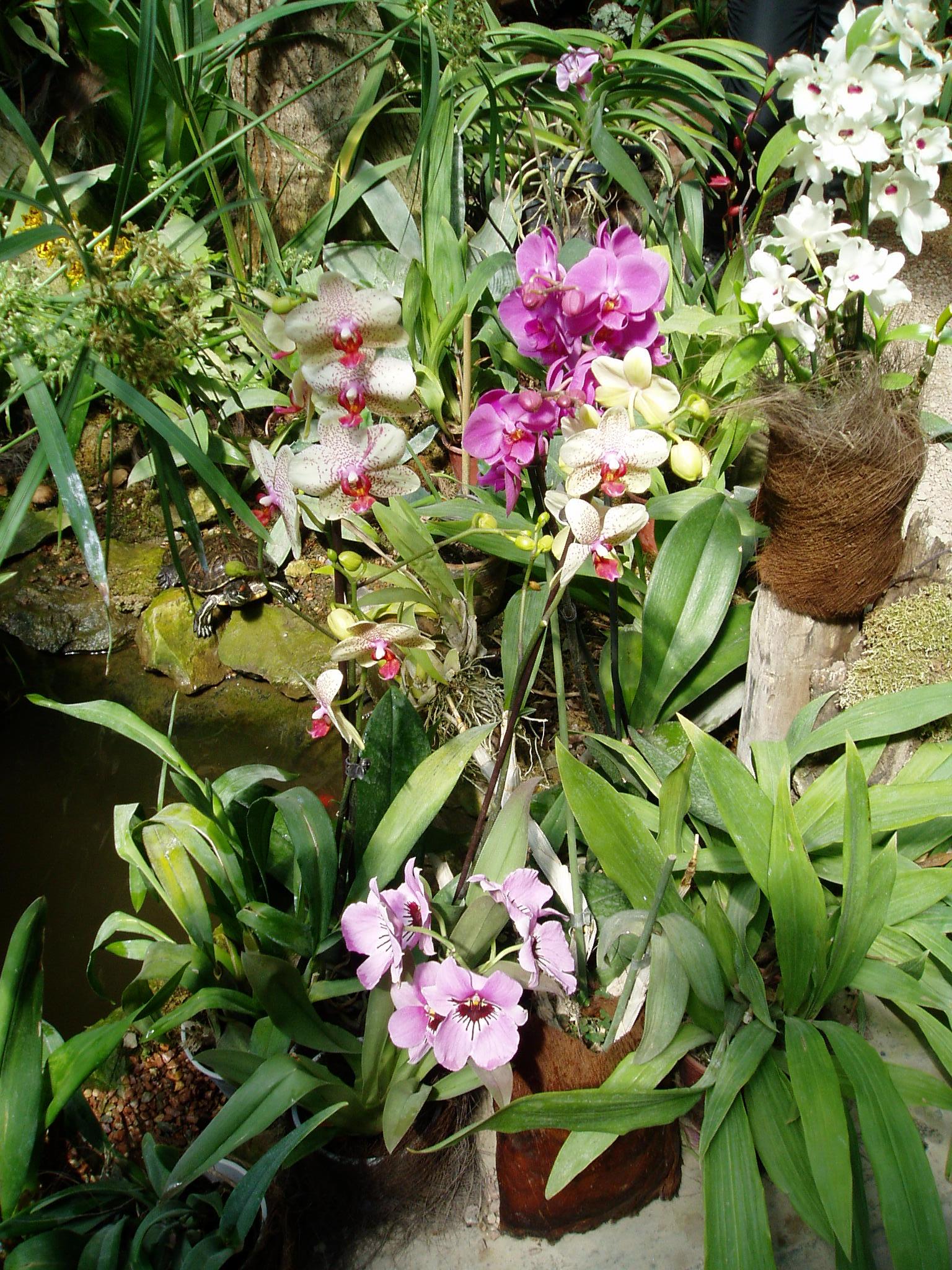Выставка Орхидей 969b9f3a41b2