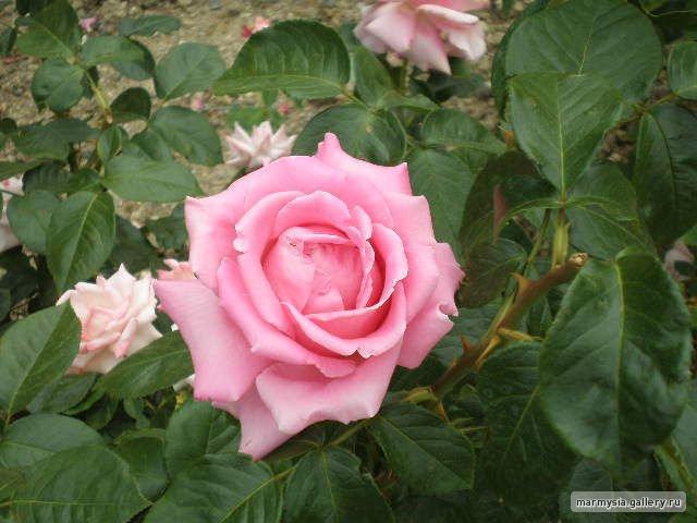 Крым. Никитский ботанический сад. 09c495d1b885