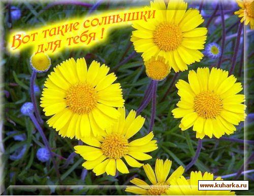 Выздоравливаем вместе ))) 306aa231e8f5