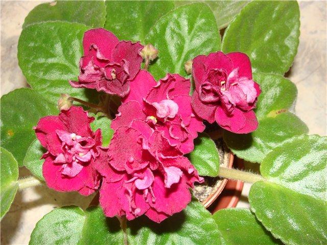 Весеннее  цветение (Хваст от Веры) - Страница 4 F762540322d4