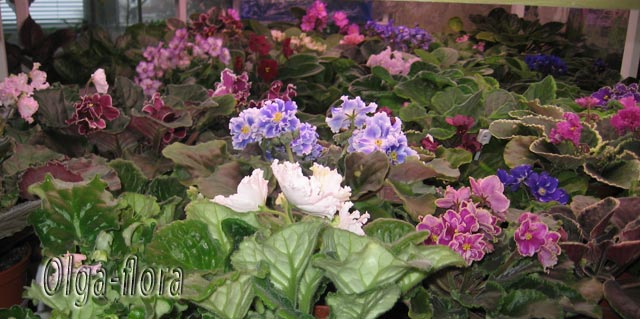 Цветение к Н. Г. (Olga-flora) - Страница 6 40d566d5b715