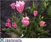 Весна идет, весне дорогу! - Страница 8 21cd4f78c537t
