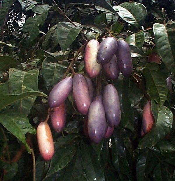 Интересные факты о фруктах. 1835e03cbe45