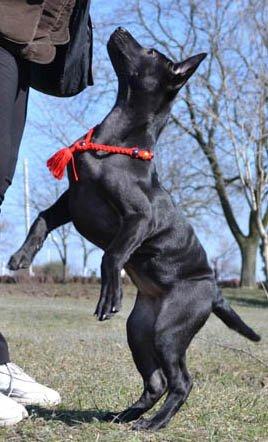MAGIC CHARM - обереги, ошейники, украшения, ринговки и другие аксессуары для  собак и кошек. 31446b9d7c4c