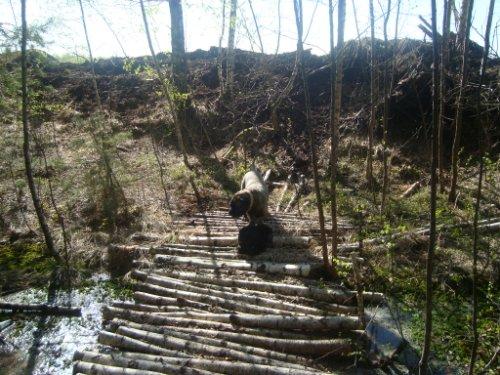 Наши собаки, друзья и гости, кот Мензурка 6984ca0ceb2d
