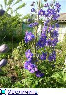 Лето в наших садах - Страница 4 E6b50b194d20t