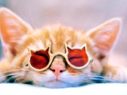 Фотографии кошек 745ff61a8f3b