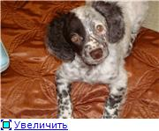 Можно ли завести собаку - Страница 2 F33dbcac60bdt