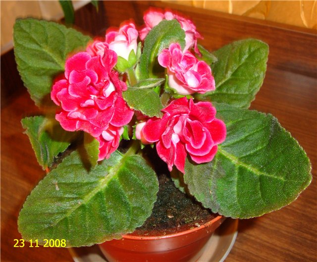 мои любимые цветочки F612b45aa874