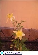 наши домашние цветники - Страница 2 B2e192ec4a73t