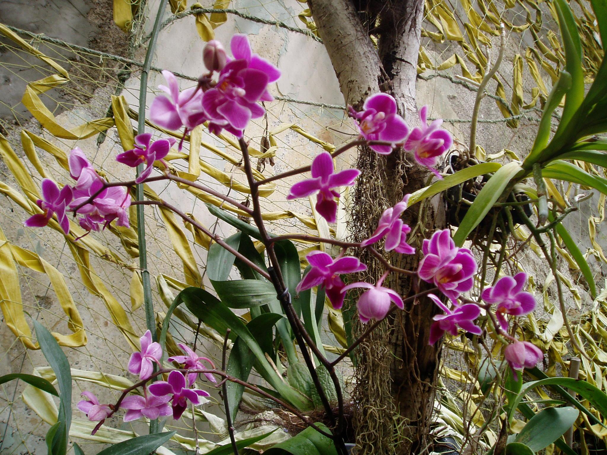 Выставка Орхидей 63b8b831c5de