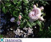 Наши цветочки Be6e6adb462bt