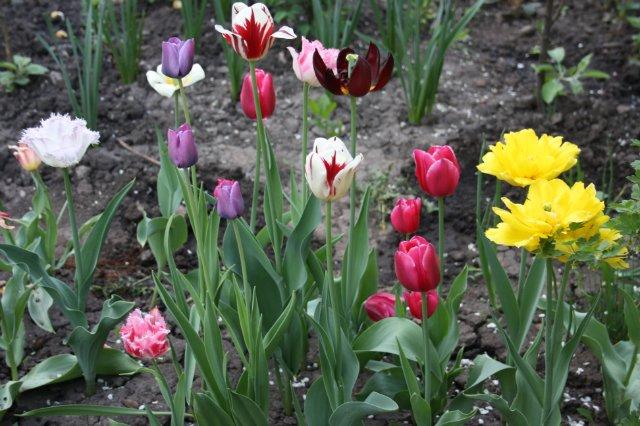 Растения от FILIGERa - Страница 2 2a1a80770fcd