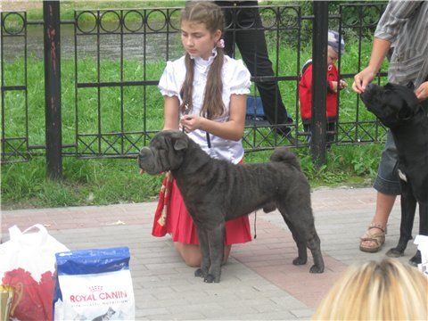 21.08.2011 Региональная выставка собак всех пород 68783b622d37