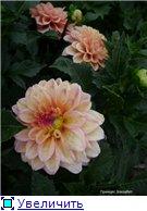 Георгины в цвету - Страница 2 A93b337eb44ft