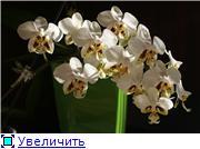 Sevgilim ( мои любимые) 2b1dff891fa7t