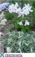 Растения для альпийской горки. - Страница 2 23b55b289b05t