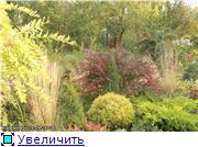Cад Людмилы Ивановой из черкасс 31a7d38e607ct