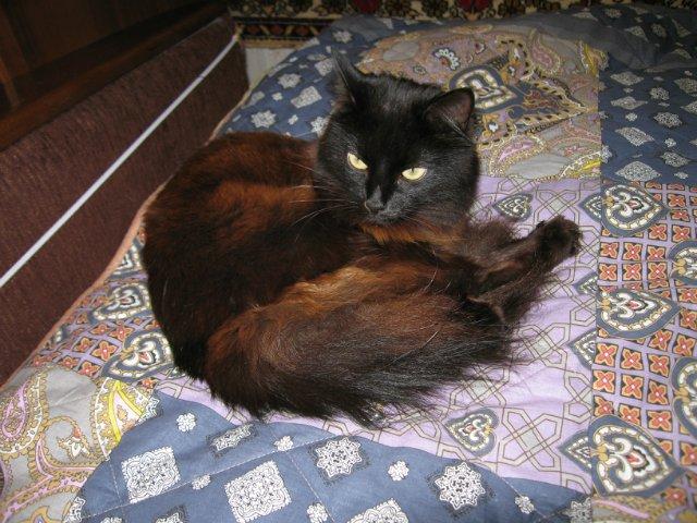 Коты, кошки, котята и все что с ними связано - Страница 64 Fc76f766fd1f
