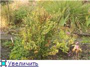 Cад Людмилы Ивановой из черкасс 55d829816169t