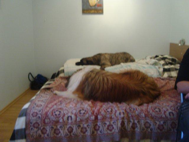 Собаки Татьяны Моисеенковой, кот Мензурка 869f23962e22