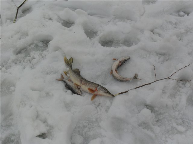 Зимняя рыбалка - Страница 2 C9bf4ce433ae