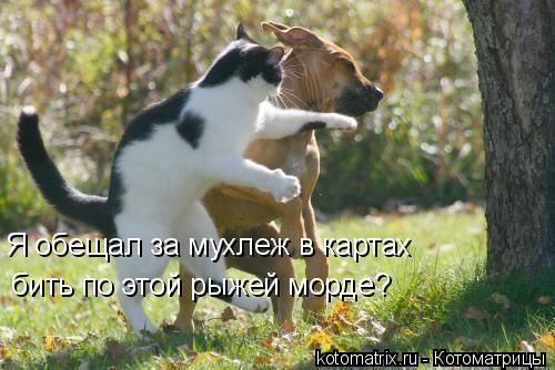 Фотографии кошек - Страница 2 Ea67c4497404