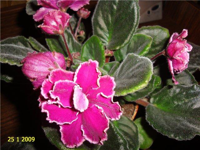 мои любимые цветочки 21a721eb6b20