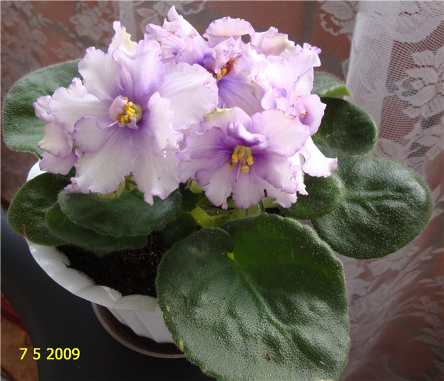 мои любимые цветочки - Страница 2 388139dc80f9
