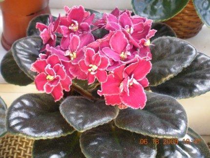 Ле-аленький цветочек 7f311a765d42